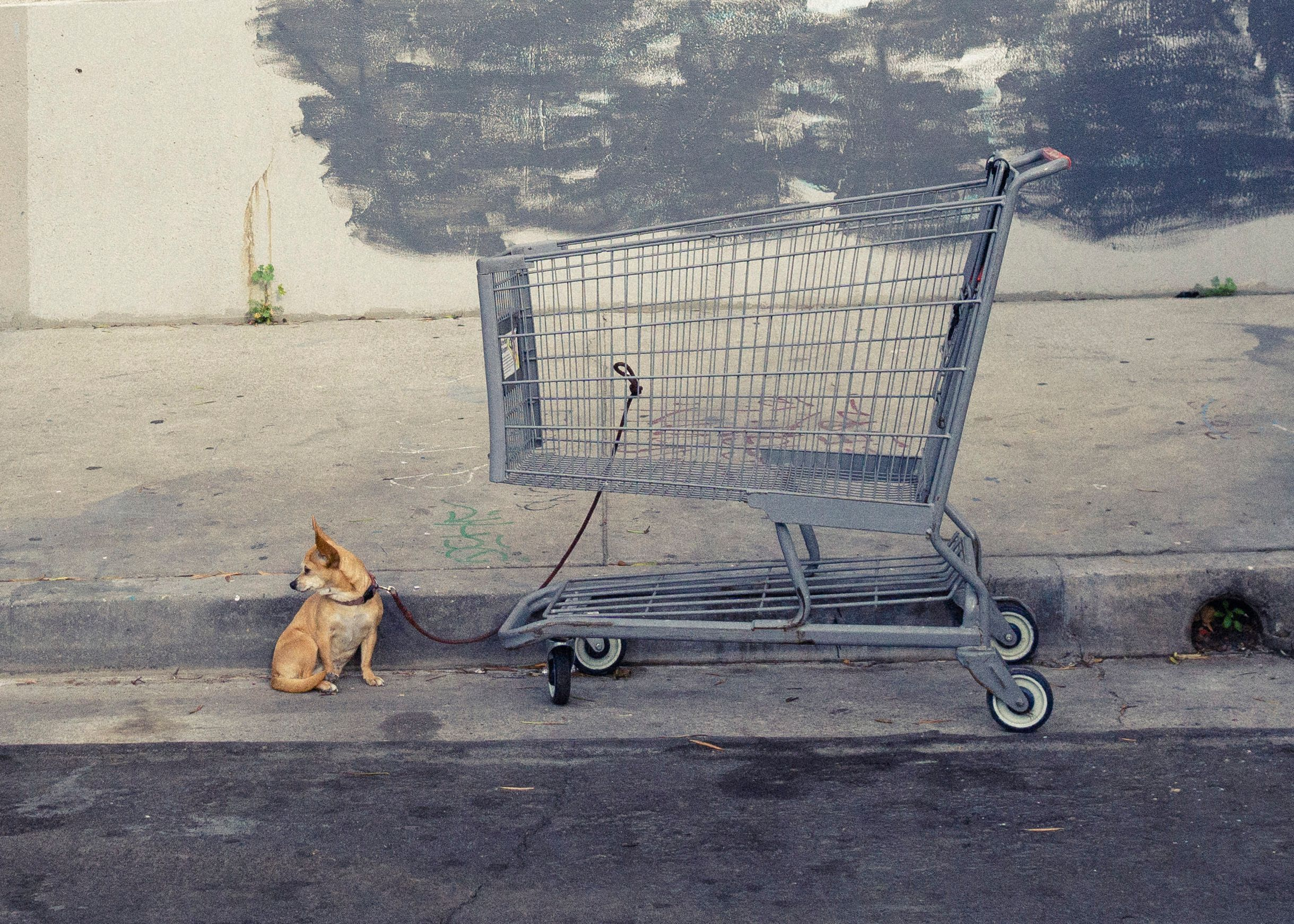 cart with dog